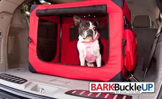 Pet-Friendly Picks for 2012